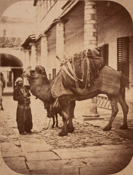 Alphonse Rubellin. Saddled camel with calf and owner
